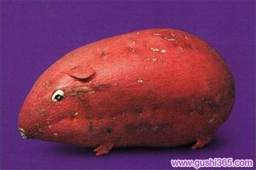 红鼻鼠的魔法种子