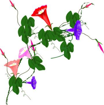 种子和花朵