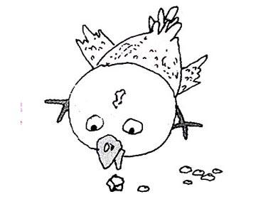小鸡吃石头