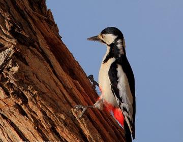 啄木鸟找事做